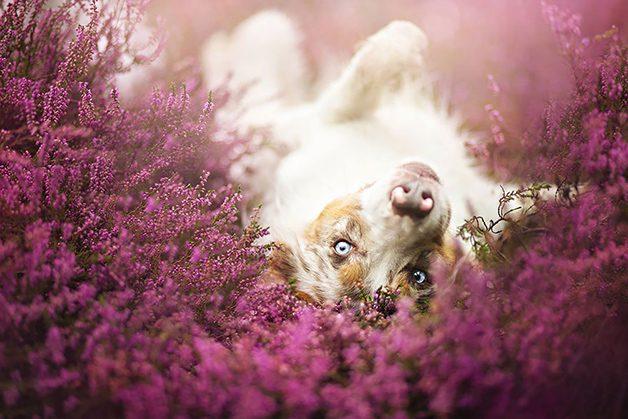 LovelyDogs14