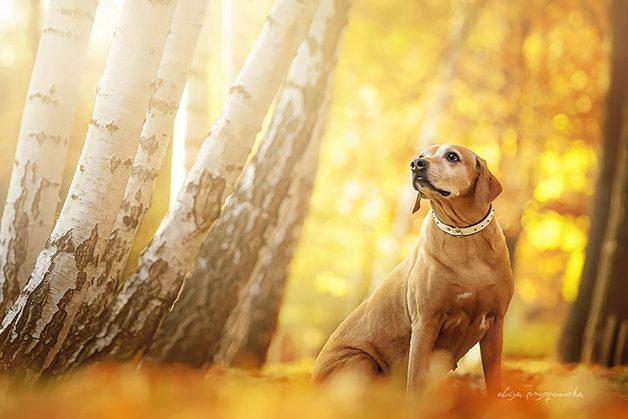LovelyDogs5