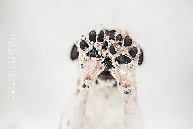 LovelyDogs9