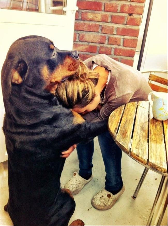 cachorro16