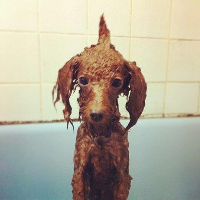 cachorros-banho-2