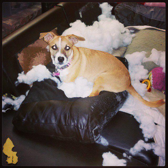 cachorros-flagra-12