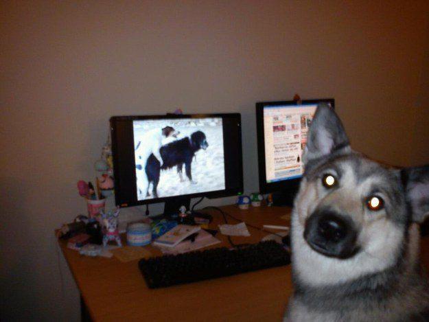 cachorros-flagra-13