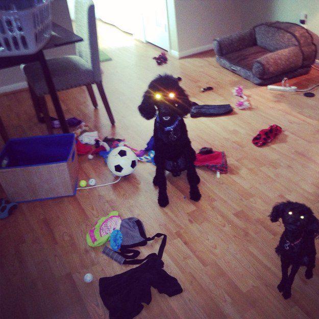 cachorros-flagra-9