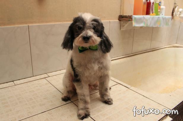 conheca historia cachorro vai pet shop tomar banho sozinho 546f8243b14a0