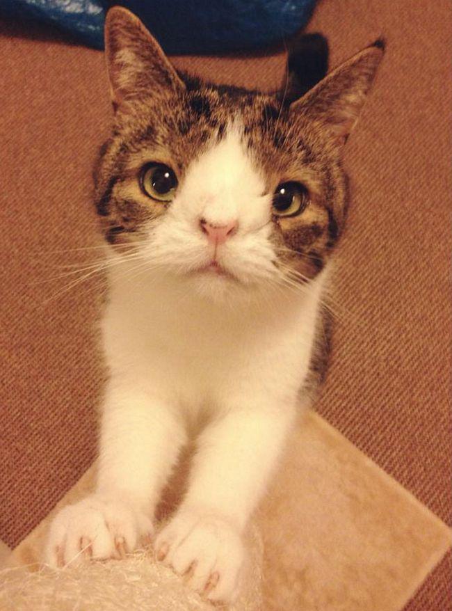 monty-gato-diferente-11