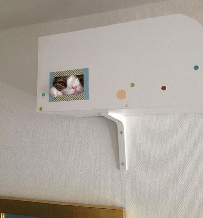 monty-gato-diferente-3