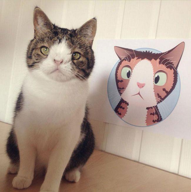 monty-gato-diferente-4