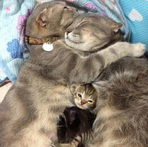 gatos-carinhosos-11