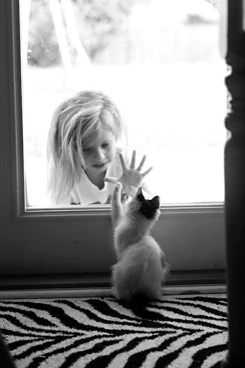 gatos-carinhosos-15