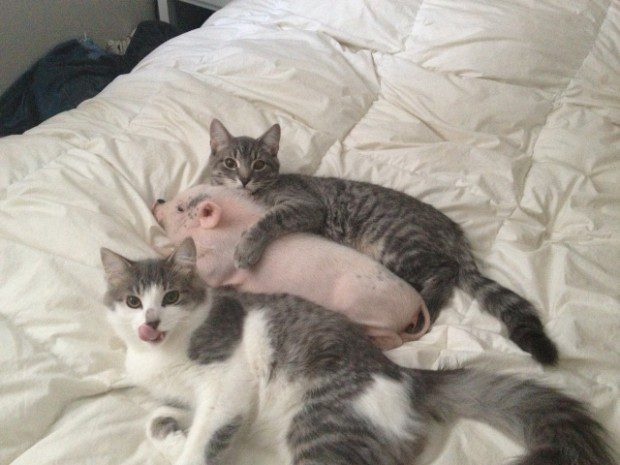 gatos-carinhosos-17