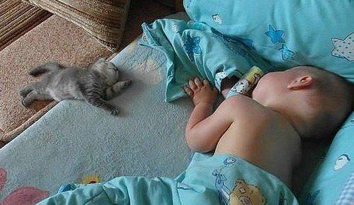 gatos-carinhosos-2