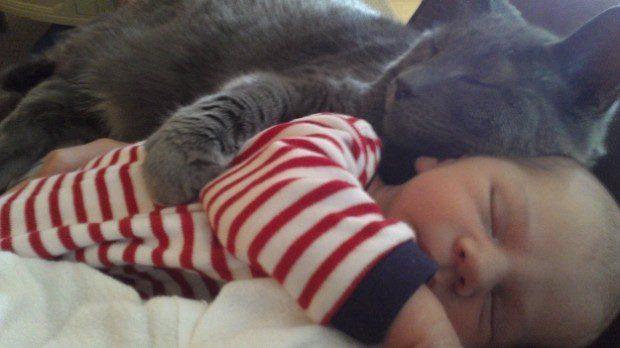 gatos-carinhosos-3
