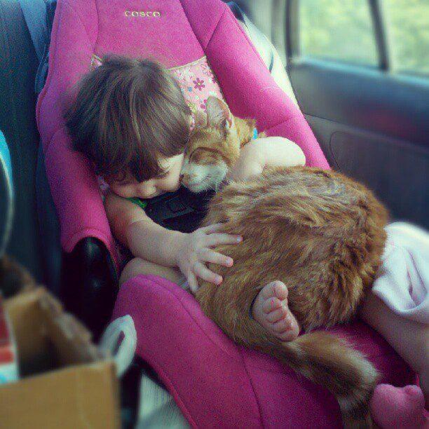 gatos-carinhosos-5