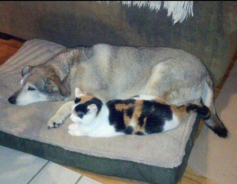 gatos-carinhosos-7