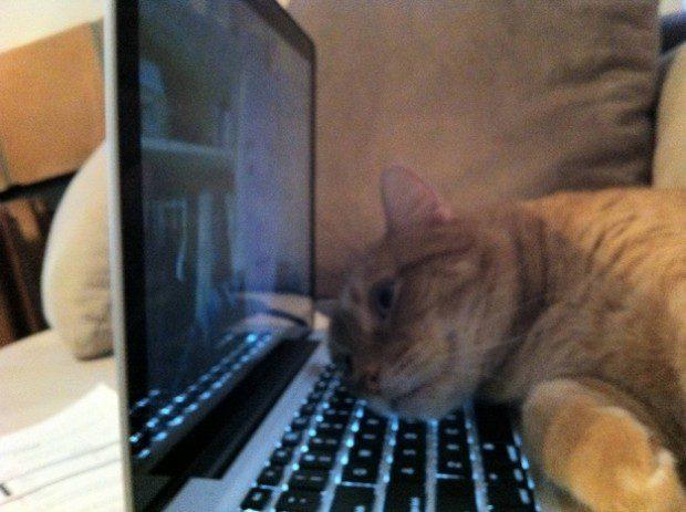 gatos-carinhosos-8