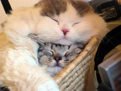 gatos-carinhosos-9