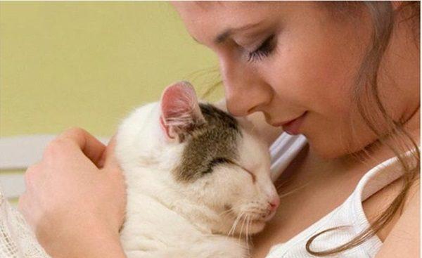 amor gato
