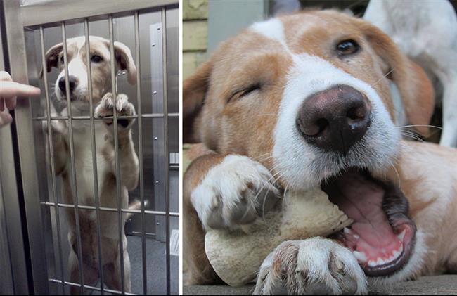 cachorros-adotados-111