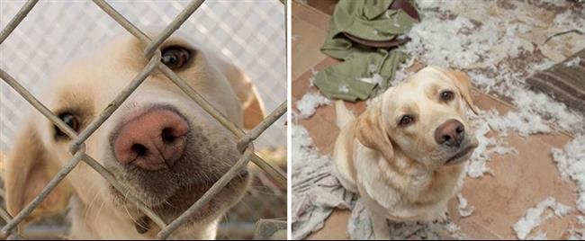cachorros-adotados-121