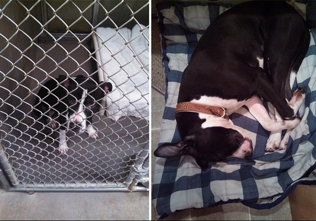 cachorros-adotados-131