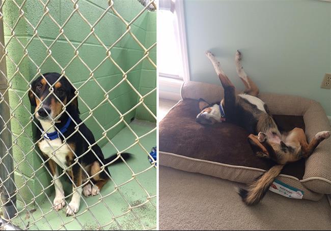 cachorros-adotados-17