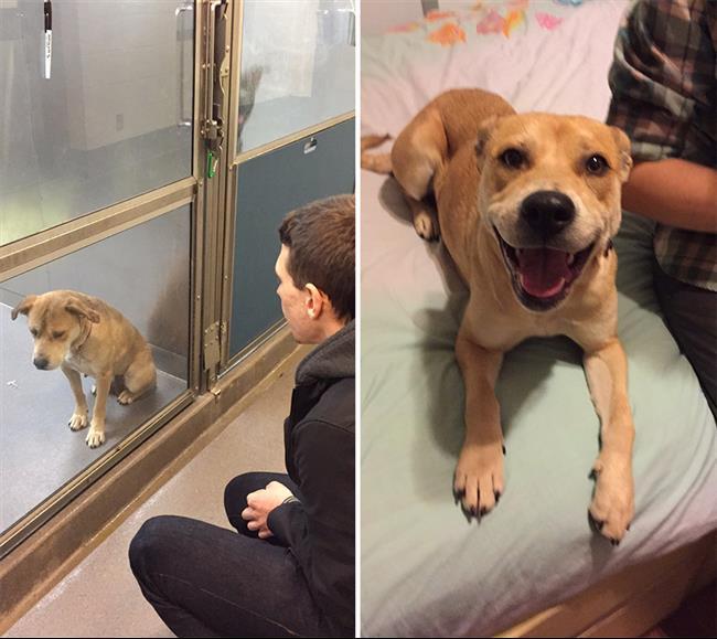 cachorros-adotados-21