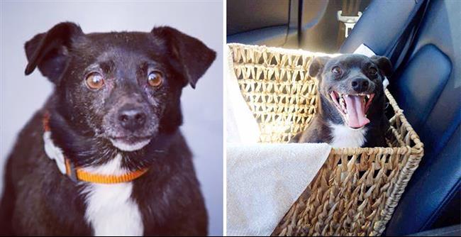 cachorros-adotados-51