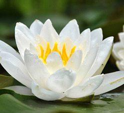 casa-flores branca
