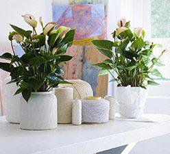 casa-plantas