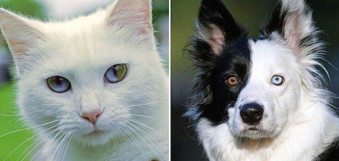 animais olhos diferentes dest