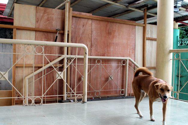 Garoto de 9 anos cria abrigo para animais