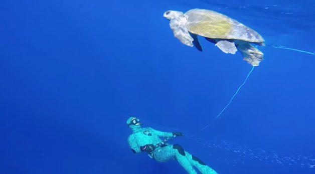 tartaruga-mergulhador1