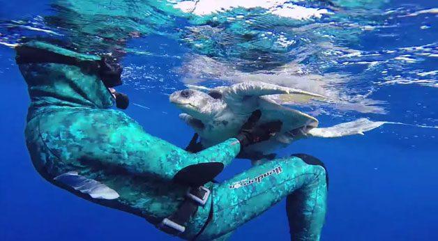 tartaruga-mergulhador3
