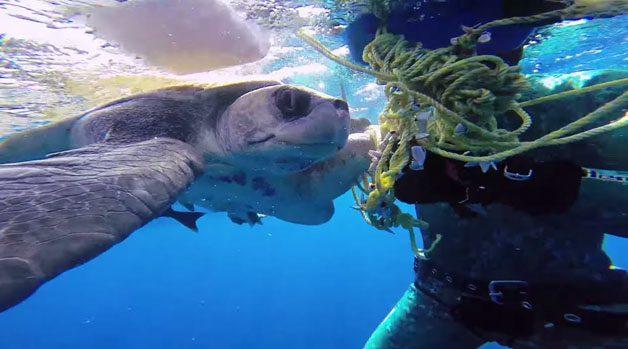 tartaruga-mergulhador4
