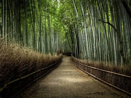Floresta de Bambu japon%C3%AAs 2