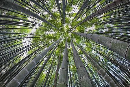 Floresta de Bambu japon%C3%AAs 3