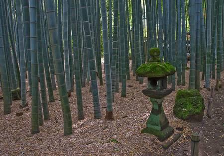 Floresta de Bambu japon%C3%AAs 4