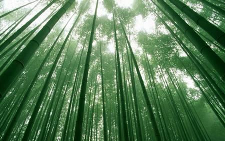 Floresta de Bambu japon%C3%AAs 7