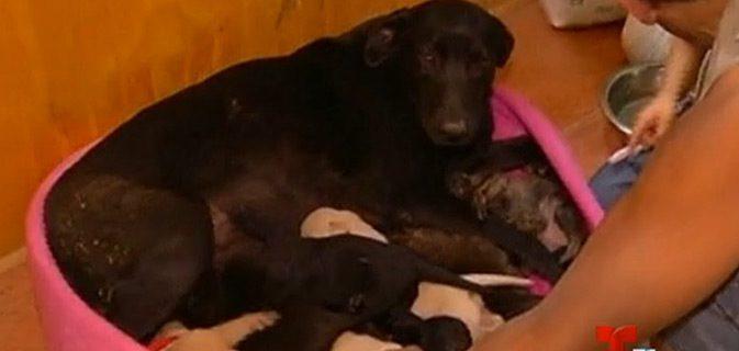 cadela enterra filhotes incendio