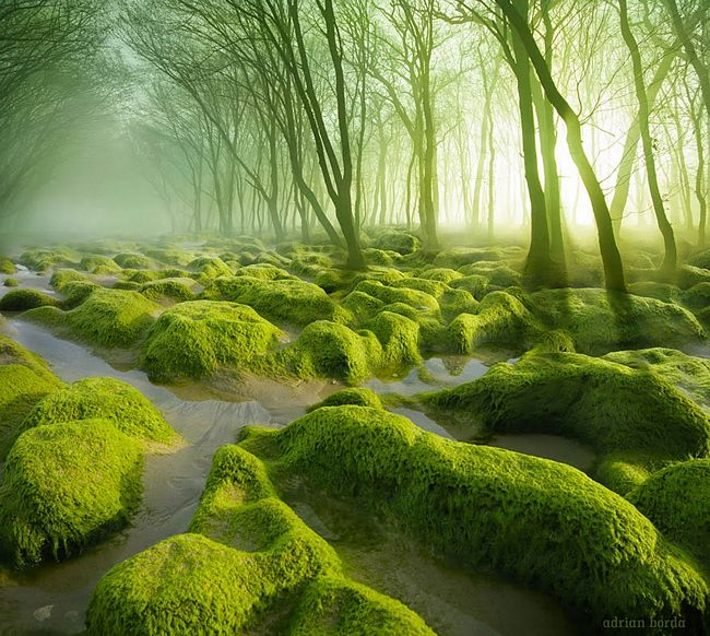 floresta-misteriosa-1