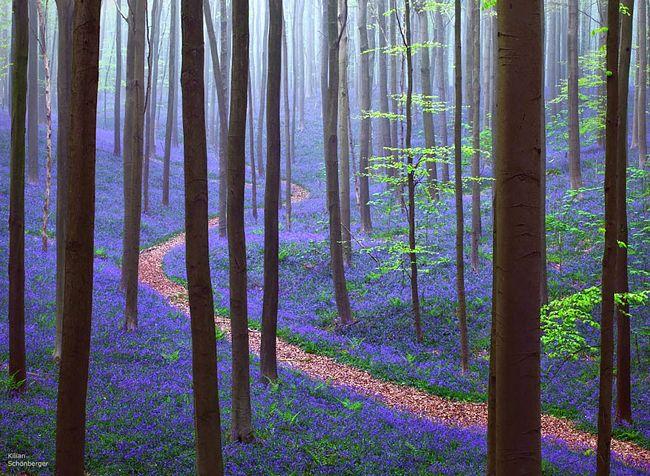 floresta-misteriosa-3