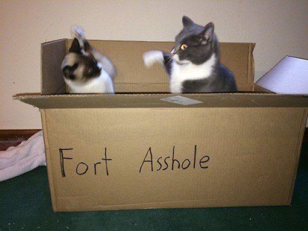 piores-gatos-mundo-11