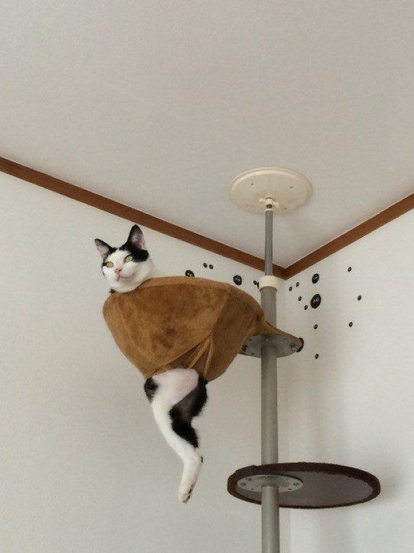 piores-gatos-mundo-13