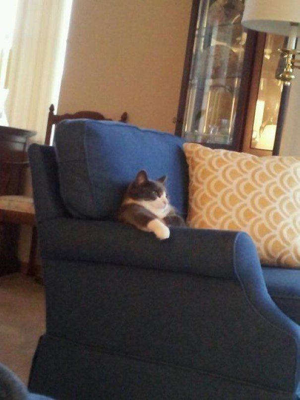 piores-gatos-mundo-14