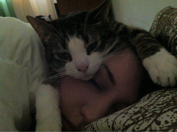 piores-gatos-mundo-3