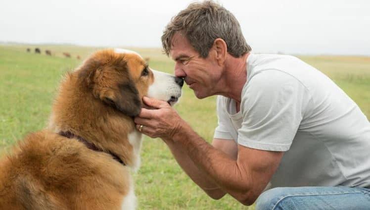 cachorro rejuvenesce