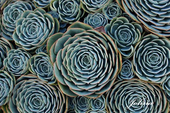 Perfect-Geometric-Patterns-In-Nature7__880[1]