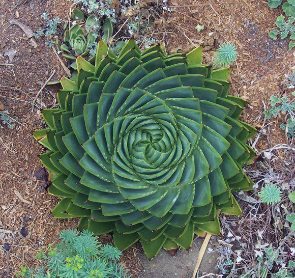 Perfect-Geometric-Patterns-In-Nature8__880[1]
