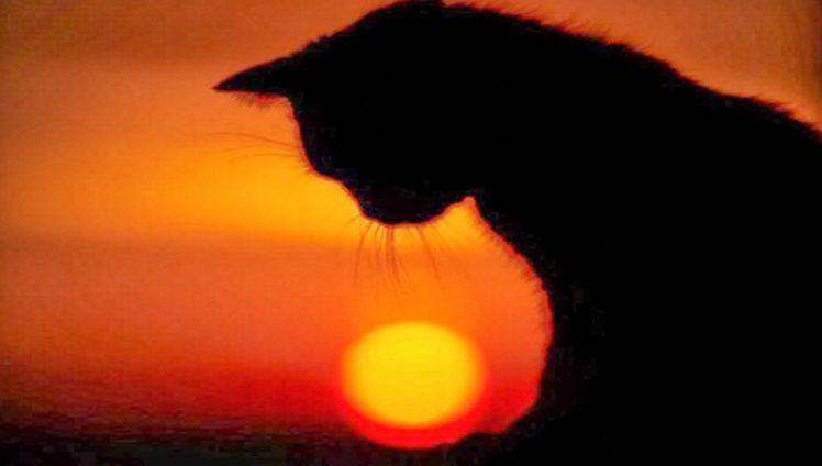 gato fim de tarde sombra